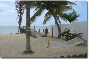 beach hammock in the palm trees