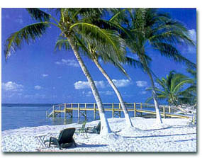 dock beach palm trees